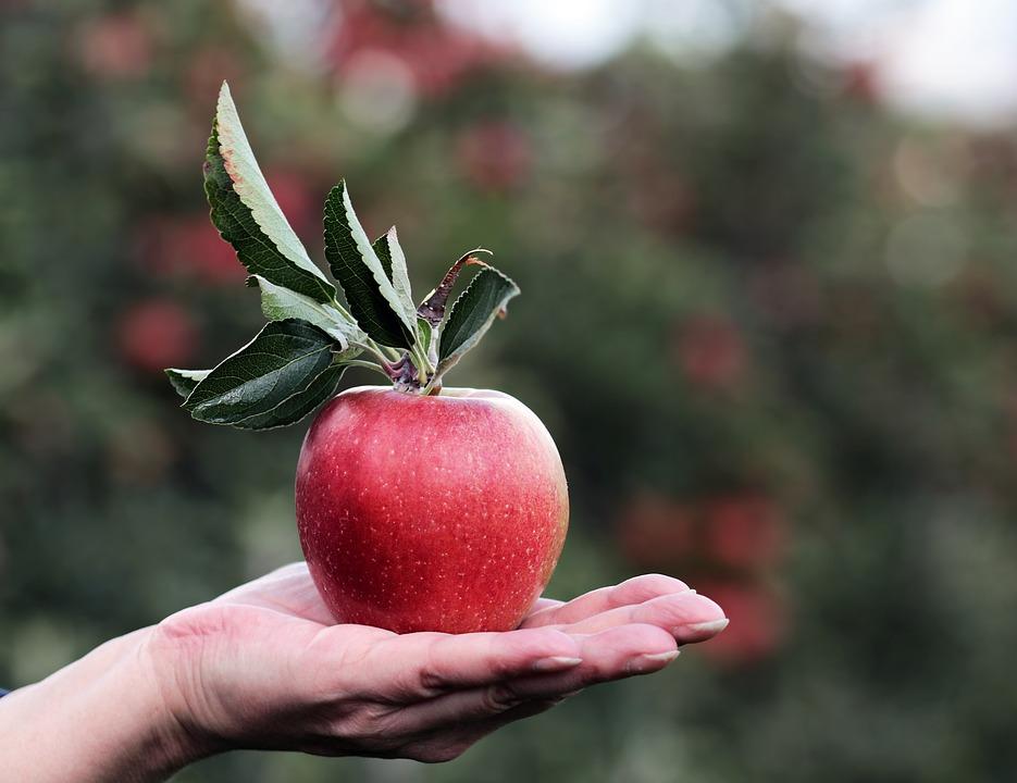 アップル りんご